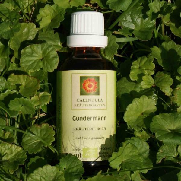 Gundermann Glechoma hederacea Tinktur
