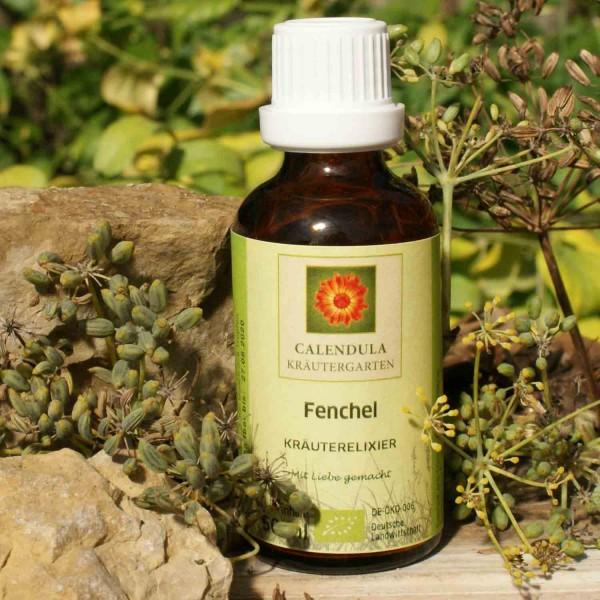 Fenchel Foeniculum vulgare Tinktur