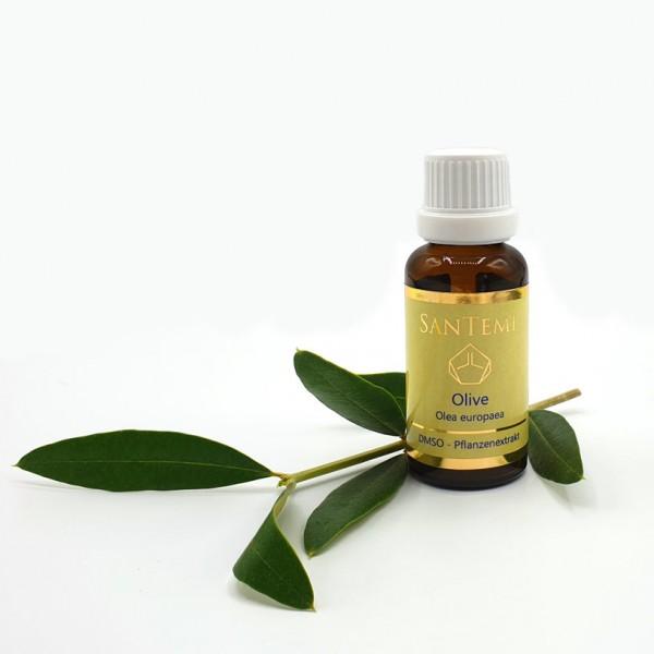 DMSO Pflanzenextrakt Olive - Olea europaea
