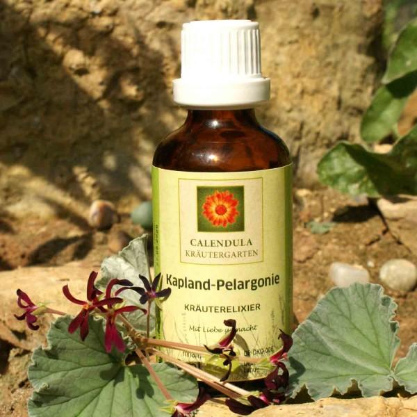 Kapland Pelargonie Pelargonium sidoides Tinktur 50ml