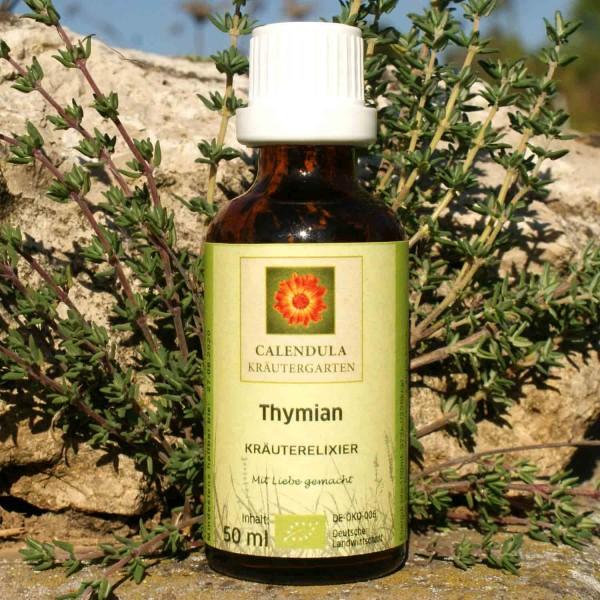 Thymian Thymus vulgaris