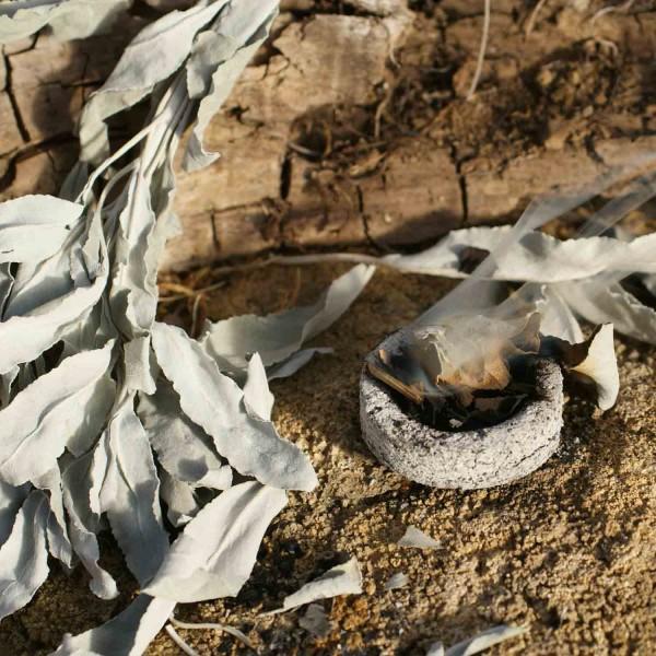 Weißer Salbei - Bio-Räuchersalbei (Blätter am Stängel 20g)