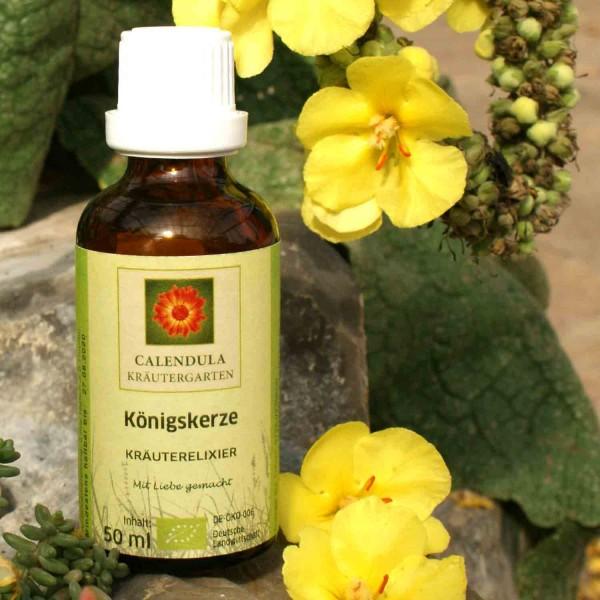 Königskerze Verbascum denisflorum Tinktur 50ml