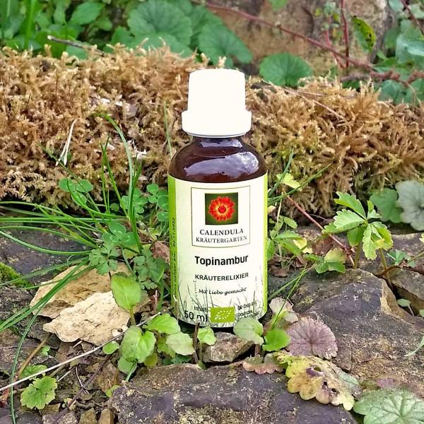 Topinambur-Helianthus-tuberosus-Tinktur