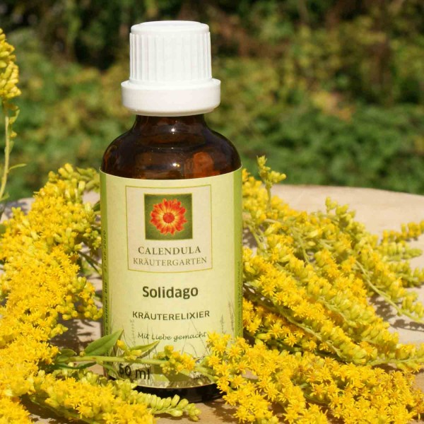 Goldrute Solidago canadensis Tinktur 50ml
