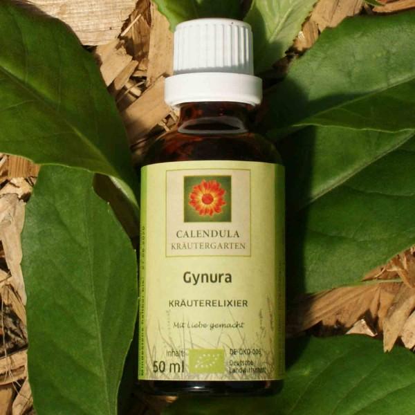 Gynura Gynura spp. Tinktur