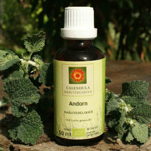 Andorn Marrubium vulgare Tinktur