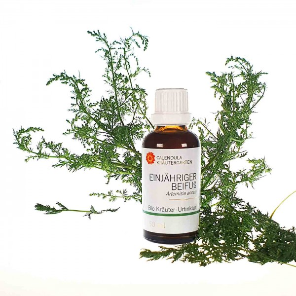 Einjähriger Beifuß Bio Kräuter-Urtinktur Artemisia annua (wahlweise 50ml oder 100ml)